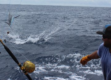 Hatteras deep sea fishing charters outer banks nc for Deep sea fishing outer banks nc